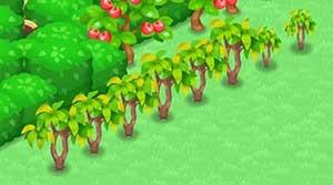 リッチカカオの木